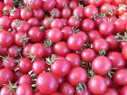 Pink Cherry Tomato Seeds Low acid but very high sugar flavor