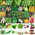 3-3000PCS Vegetables Seed Vegetable Garden Courtyard Decor Seeds Wholesale Lots