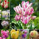 New Nice Adorable Flower Fragrant Seeds Fragrant Blooms Tulip Seeds RLWH