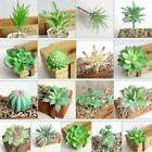 1* Artifical Plastic Succulent Plant Cactus Echeveria Flower Home DIY Decor Gift