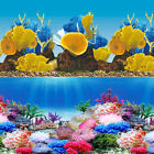 "Rainbow Reef Coral 2 Scene 18""-20"" Aquarium Background"