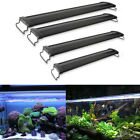 Aquarium Lights, Aquarium Fish Tanks UK