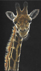 Giraffe t-shirt all family size adult youth toddler 3t to 2x 3x 4x 5x 6x US sz image