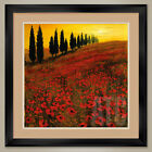 32W*x32H*: POPPIES by STEVE THOMS - POPPY FIELDS - DOUBLE MATTE, GLASS & FRAME