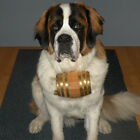 Saint Bernard Dog Collar Barrel - Half Liter - Pet Accessories for Liquor Lovers
