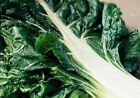 Swiss Chard Seeds - 'Large White Ribbed' - Beautiful & Tasty!!  FREE SHIPPING!!