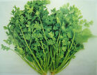 Coriander Cilantro Seeds -  Mexican and Tex-Mex cooking-Southeast Asian cuisine