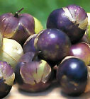 RARE - Purple Tomatillo-Beautiful purple fruit! - Great grilled ! Free Shipping!
