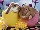 Easter Bunnies - Edible Icing Image - Cake Topper Decoration