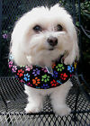 Puppy Bumpers® Keeps dogs from getting thru fence rails! Rainbow Paws - 3 Sizes