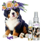 THE BLISSFUL DOG BERNESE MOUNTAIN DOG RELAX AROMATHERAPY ANXIETY STRESS FEAR