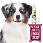 AUSTRALIAN SHEPHERD RELAX THE BLISSFUL DOG AROMATHERAPY FOR ANXIETY FEAR STRESS