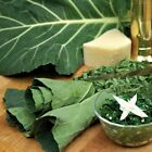 Flash Collard Seeds (Hybrid) An excellent cutting green - A mild , Sweet Flavor!