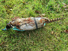 Real Pheasant Pelt Dog Training Dummy Working Gun Dog Shooting Beating Pick Up