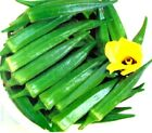 Chanchal Okra Seeds of India -  Lush green and tender!! MMmmm.. Free Shipping!