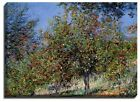 Canvas Print, Claude Monet, Apple Trees on the Chantemesle Hill, 1878