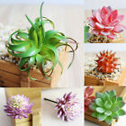 Artificial Flower Plastic Miniature Succulents Plant Cactus Echeveria Home Decor
