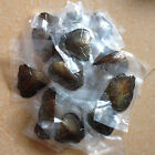 5/10/25/100 PCS Individual Wrapped Oysters with Large Pearls 7-8mm Gift