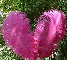Wholesale 100-2000pcs Quality Natural Rose OSTRICH FEATHERS 10-12'inch/25-30cm