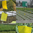 10PK Large Area Yellow Hanging Sticky Glue Flying Pest Insect Trap Catchers Bug