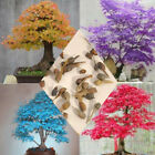 20Pcs/Bag Maple Tree Bonsai Seeds Acer Palmatum Atropurpureum Plant Home