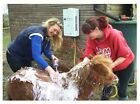 Portable Horse Shower from Showerking; Hot Water for Horses; Eccotemp L10 UK