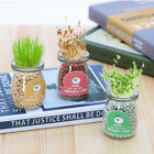 Glass Potted Plants Mini Bonsai Seed Anion Water Desk Home Decor Birthday Gift