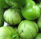 Giant Tomatillo - For traditional green salsa sauce! Excellent Flavor!