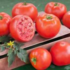 Early Goliath Hybrid Tomato Seeds One of the earliest slicing tomatoes !!!!