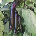 Shikou Hybrid Eggplant Seeds - Use Shikou in stir-fries grill it in long slices!