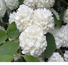 Trees and Shrubs Just In Time for Spring!  Over 30 Different kinds. Free Ship
