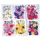Pressed Dried Flowers Mixed UV Resin Filling Nail Art Scrapbooking DIY Crafts