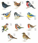 Bird Variety Select Type & Size Waterslide Ceramic Decals Bx image