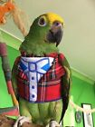 Parrot Waistcoat Tuxedo Scotland - theme mega cute Easy on sizes Petite to Large