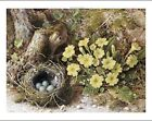WILLIAM B. HOUGH Bird's Nest still CANVAS/PAPER ! choose SIZE, from 55cm up, NEW