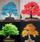 Внешний вид - 20Pcs Japanese Maple Tree Seeds 5 Kinds Rare Acer Palmatum Bonsai Potted Plants