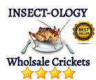 Kyпить ???? LIVE Crickets for Reptiles Live Arrival FREE HEAT/COLD PACK 250 500 1000 ???? на еВаy.соm
