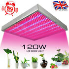 120W 1365 LED Grow Light Lamp for Medical Indoor Hydroponic Plant Veg Flowers UK