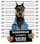 Doberman Pinscher Mug Shot Size Youth Small to 6 X Large T Shirt Pick Your Size image