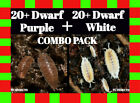 40ct ISOPOD COMBO PACK: 20+ Dwarf White and 20+ Dwarf Purple, terrarium isopods