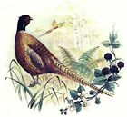 Pheasant Wild Bird Select-A-Size Ceramic Waterslide Decals Bx image