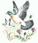 Dove Wild Bird Select-A-Size Ceramic Waterslide Decals Bx image