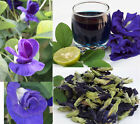 Dried in a mild sunshine - 100% Pure Natural Organic Blue Butterfly Pea Tea