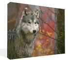 Lone Wolf Canvas Print Wall Art Premium Wild Red Wolf 2  Framed Ready To Hang