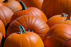 Pumpkin Type Soap / Candle Making Fragrance Oil 1-16 Ounce