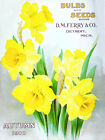 Canvas Home Wall Prints 1910 Vintage Seed Packet Daffodils Flowers Print Picture