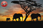 African Elephants Sunset Silhouette Poster Print Wall Art Premium Modern Picture