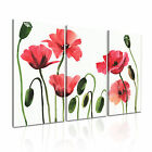 FLOWER Poppy 9 Canvas 3A Framed Printed Wall Art ~ 3 Panels