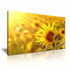 FLOWER Sunflower 1 1-21 Canvas Framed Printed Wall Art ~ More Size