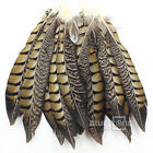Wholesale 10-100pcs Beautiful Natural Pheasant Tail Feathers 20-25cm/7.9-9.8inch